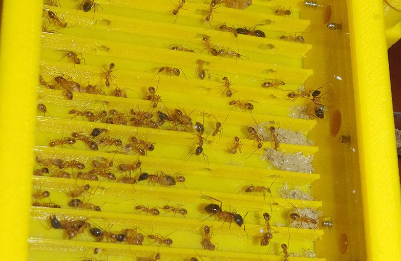 Покупка муравьев зимой